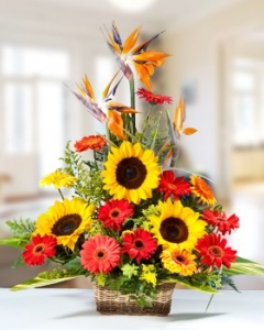 Sunflower & red Gerbera basket