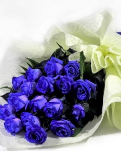 12 holland blue roses bouquet